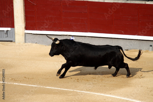 Photo Stands Bullfighting fighting bull