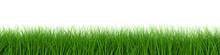 Fresh Grass Row