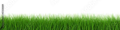 Obraz fresh grass row - fototapety do salonu