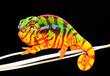 Chameleon Pardalis
