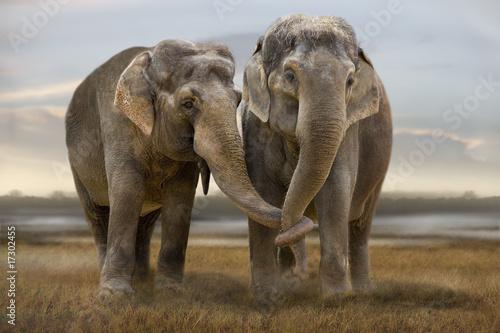 Foto op Plexiglas Olifant Elefant 003