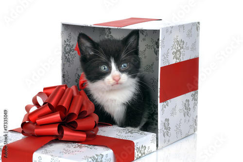 Small Cute Kitten Inside Gift Box As Birthday Present