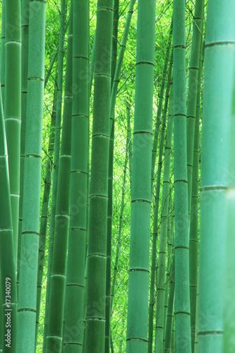 Foto op Plexiglas Bamboe 嵯峨野の竹林