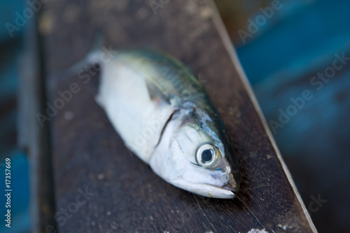 Fotografia, Obraz  Fischfang in Indien