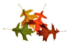Fall Foilage 5