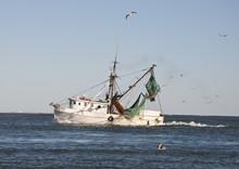 Shrimp Boat With Flock Of Sea Gulls