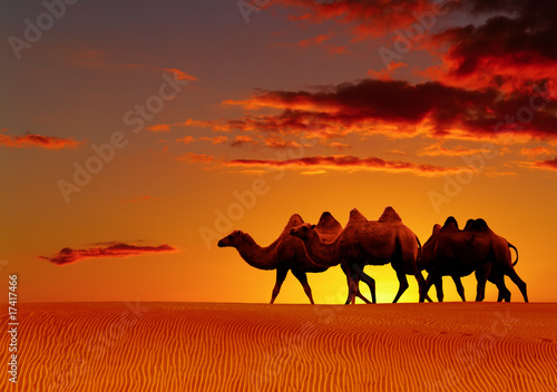 Foto op Canvas Baksteen Desert landscape with walking camels at sunset