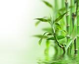 Fototapeta Bedroom - Bambus im Wasser