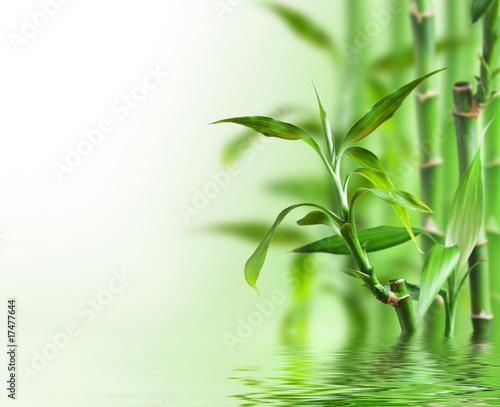 Plissee mit Motiv - Bambus im Wasser
