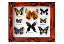 A Framed And Mounted Collectio...