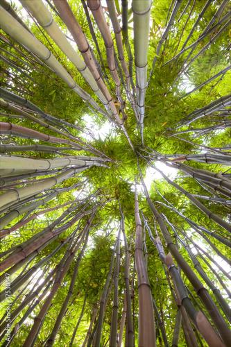Fototapety na sufit   las-bambusowy