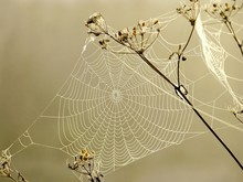 Spider Web On A Meadow In The ...