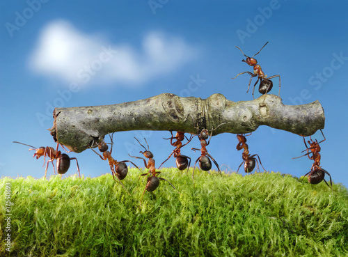 Spoed Foto op Canvas Bruggen ants carry log with chief on it