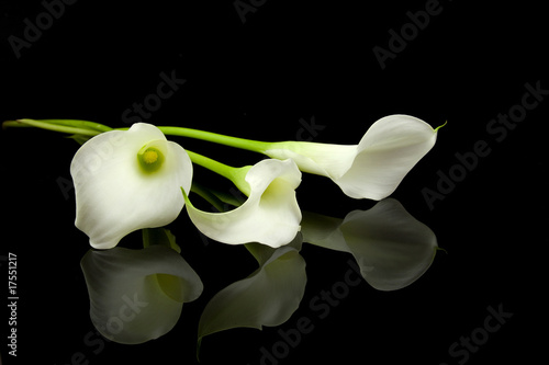 Foto White Calla lilly flowers over black background
