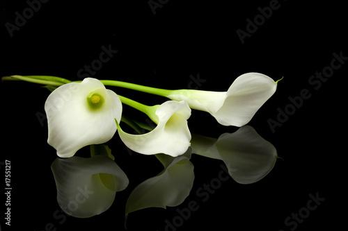 Fotografie, Obraz  White Calla lilly flowers over black background