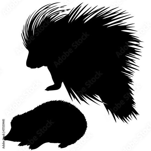 Fototapety, obrazy: . silhouette of the hedgehog and porcupine