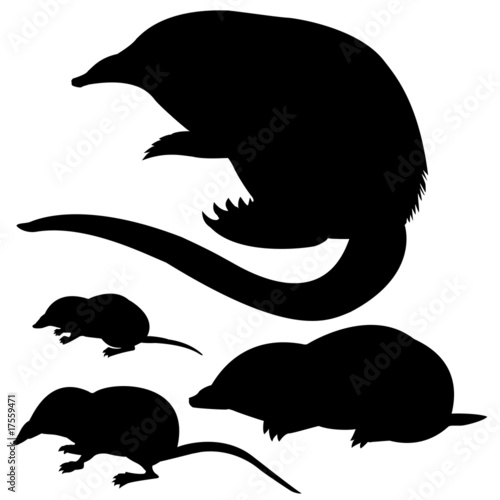 Fotografie, Obraz  silhouette of the mole, mouse and desmans