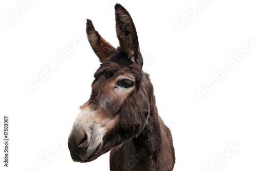 Foto auf Leinwand Esel Esel Freisteller