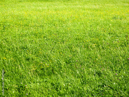 Foto-Lamellen - Flowering meadow (von Viktor)