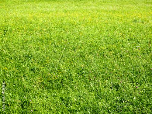 Foto-Duschvorhang - Flowering meadow