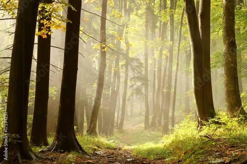 Keuken foto achterwand Weg in bos Autumn forest path leading to the top of the mountain