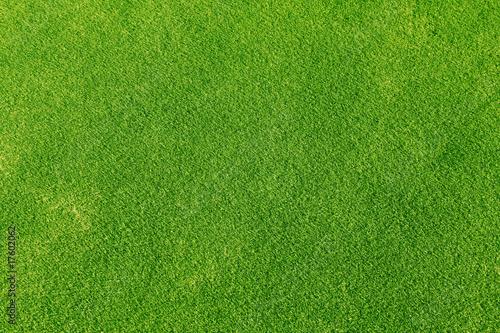 Fotografie, Obraz  Green grass
