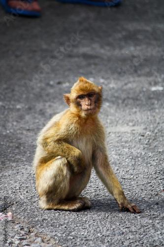 Garden Poster Parrot Sad Monkey