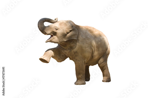 Foto op Aluminium Olifant Elefant wd168