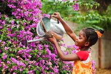 African Gardener
