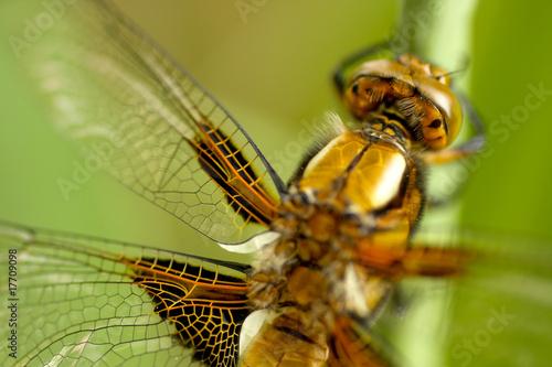 Fototapeten Natur insect.004
