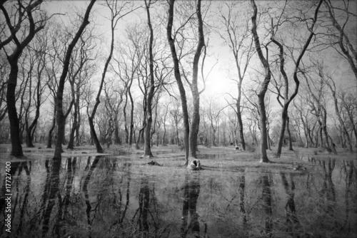 Plakaty Dżungla drzewa-czarno-biale