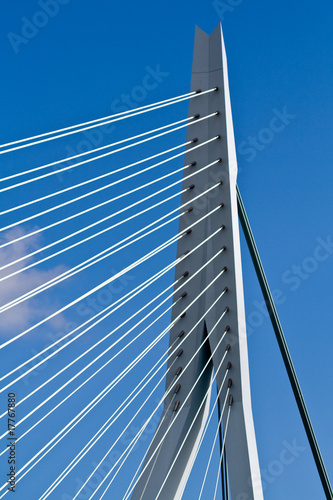 Foto auf Acrylglas Schwan Erasmus Bridge. Pilons