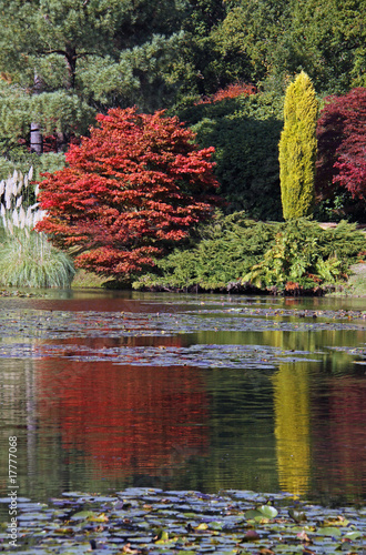 Foto op Canvas Khaki Rural autumn lake view of lillys and trees