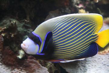 Fototapeta na wymiar Pod wodą