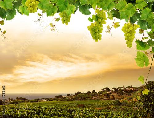 Foto auf Gartenposter Weinberg Vineyard by sea and grapevine