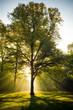 Leinwanddruck Bild - Baum im Gegenlicht