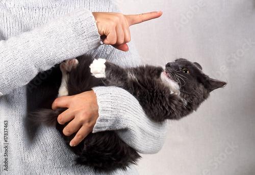 jeune chat des forêts norvégiennes attiré par le doigt du maitre Canvas Print
