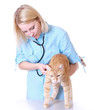 canvas print picture - Veterinarian on white holding a orange cat