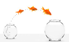 Three Goldfishes Jumping From ...