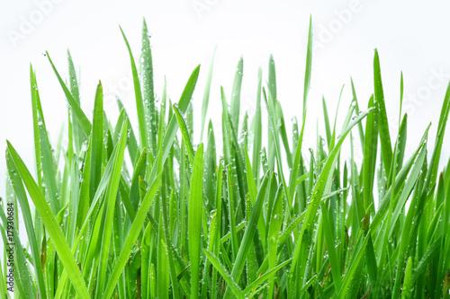 zielona-trawa-na-bialym-tle