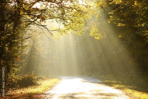 Papiers peints Foret brouillard Autumn scenery of the forest road in the fog at sunrise