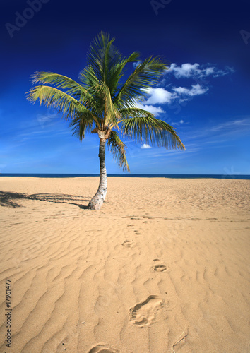 Foto-Kissen - Tropical beach. Tenerife, Canary Islands. (von -Misha)