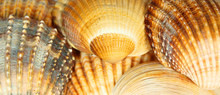 Shells Abstract Background