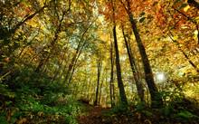 Foret D'automne