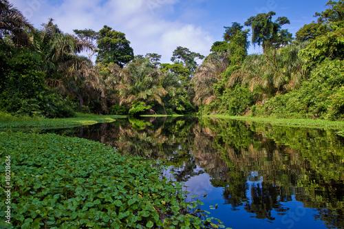 Foto auf Gartenposter Fluss A river and trees in a rainforest