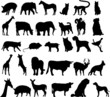 Vector silhouettes of differente animals
