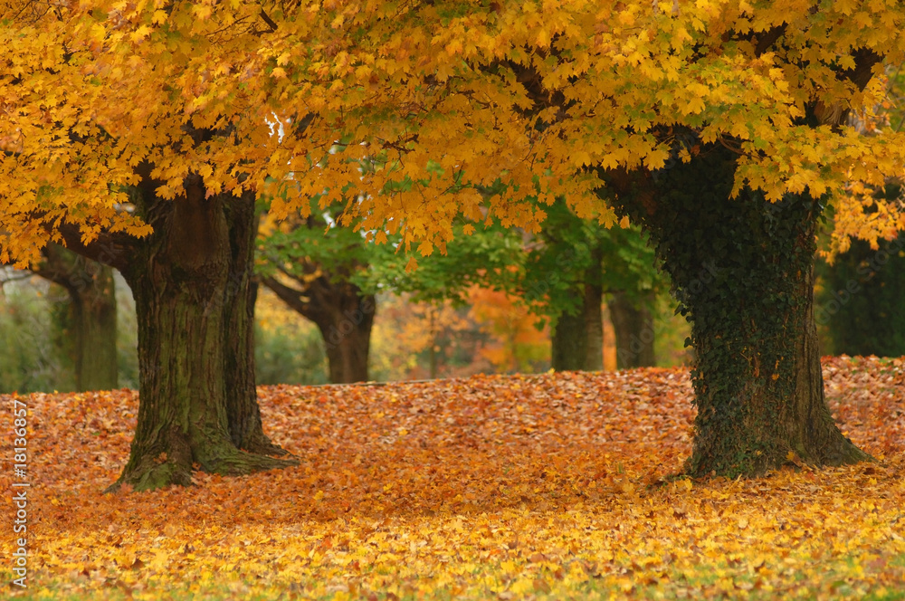 Leinwandbild Motiv - John Keith : autumn path
