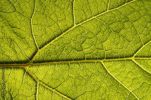 Green Leaf Macro #18144688