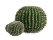 Golden_barrel_cactus_(Echinocactus_grusonii)