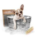 Fototapeta Dogs - Dog Getting a Bath in a Washtub In Studio
